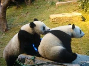 biting_panda1